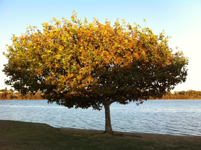 River tree 2